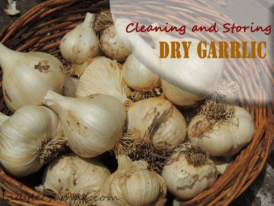 cleaning-storing-dry-garlic