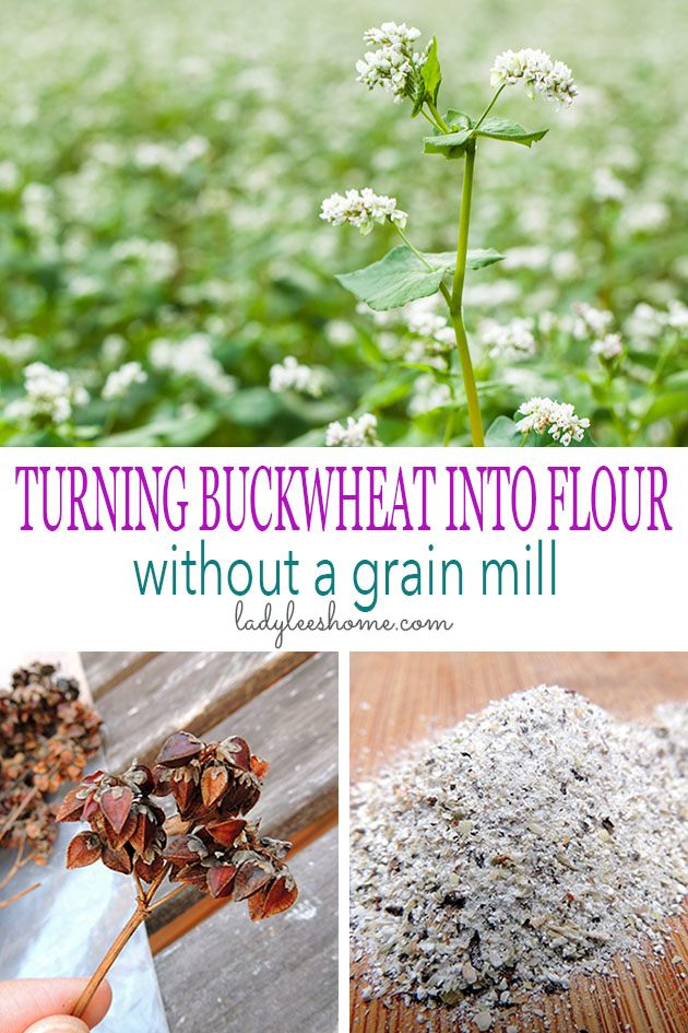 How to process buckwheat. How to make buckwheat flour without a grain mill and how to dehull buckwheat and the process of milling buckwheat. #howtogrowbuckwheat #buckwheatrecipes #healthbenefitsofbuckwheat #howtoprocessbuckwheat #buckwheat