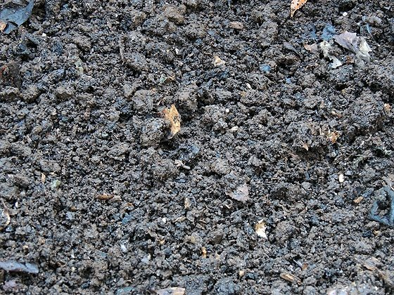What is vermicomposting and how you can use worms to make worm castings at home. Worm casting is very rich in nutrients and an amazing organic fertilizer.