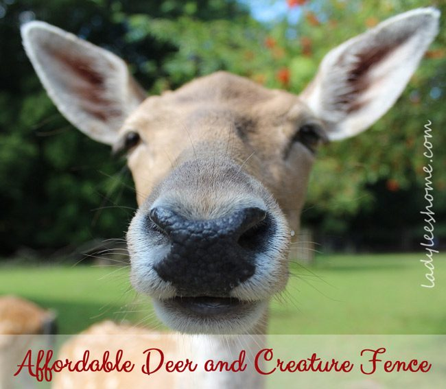 Affordable Deer and Creature Fence