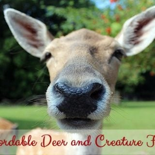 Affordable Deer Fence and Creature Fence For the Garden