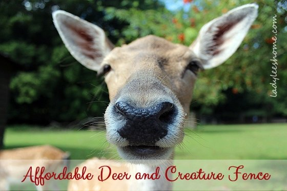 deer-fence-03