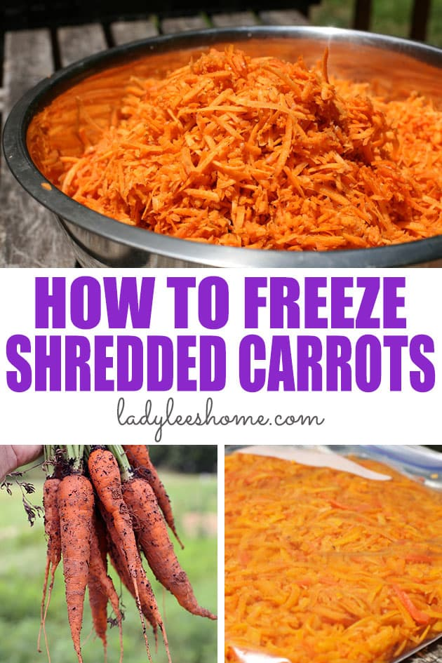 A step by step tutorial on how to blanch and freeze shredded carrots. Freezing shredded carrots is easy and saves a lot of work later! #howtofreezeshreddedcarrots #howtopreservecarrots #preservingcarrots #howtofreezecarrots
