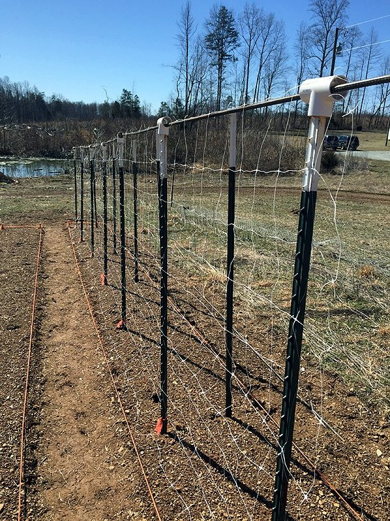 How to Build Tomato Trellis