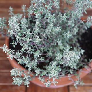 8 Herbs for Your Indoor Herb Garden