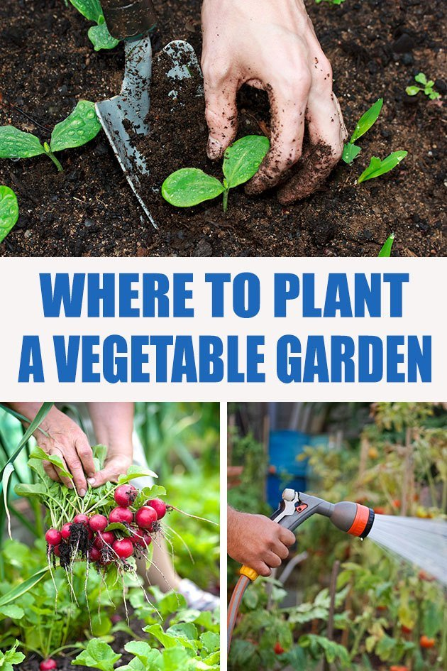 These eight points will help you decide where to plant a vegetable garden so you can grow a ton of vegetables in your first year of gardening!#organicgarden #vegetablegarden #gardenlocation #gardening