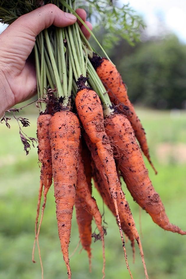 carrots-3