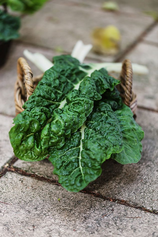 Chard leaves in a basket.