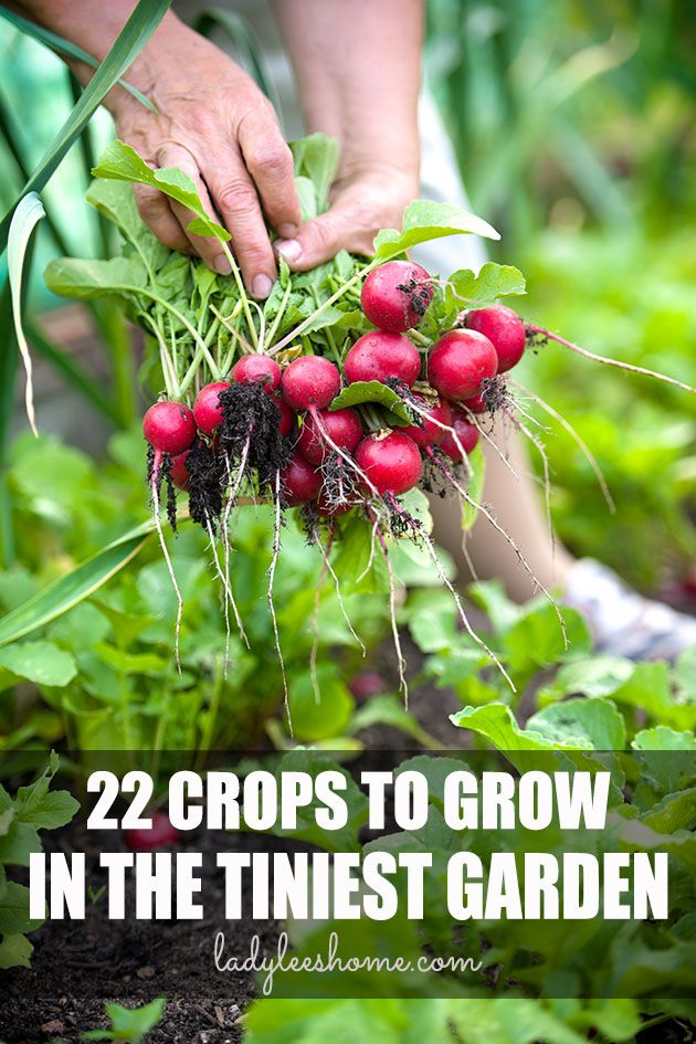 Here is a list of 22 crops that you can grow in a small vegetable garden. Even if your garden is small, you can still produce a whole lot of food by growing these!