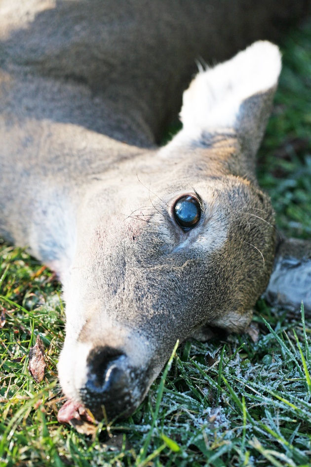 butcher-deer-04
