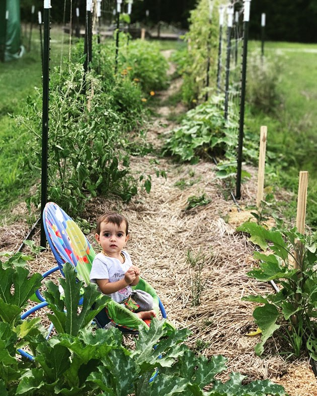 Create a kid friendly vegetable garden by planting these 17 vegetable varieties. Your kids will love these colorful, small, sweet and tasty, and easy to grow vegetables...