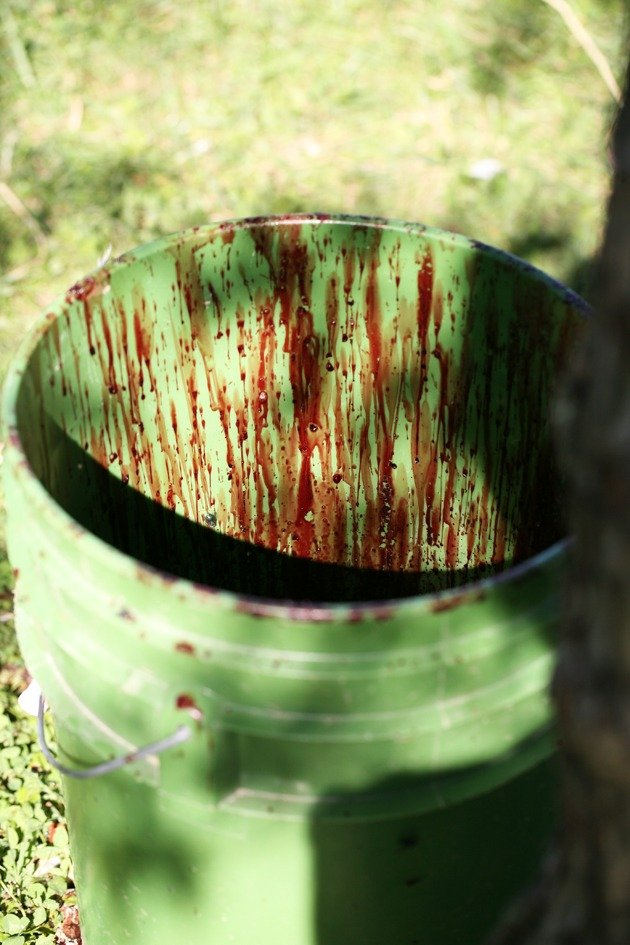A bucket with blood