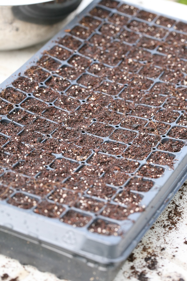 Seed starting flat is ready for the grow light shelves.