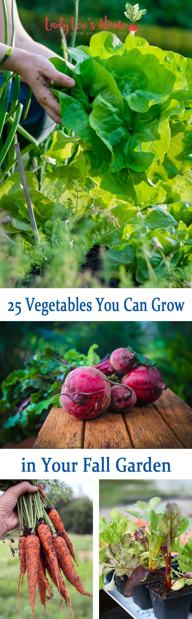 In this post, we go over 25 vegetables you can grow in your fall garden. We will learn when to plant and what to plant for a great fall garden! #LadyLeesHome #gardening #organicgardening #vegetables #growvegetables #fallgarden #gardening #homestead #homesteading #growyourownfood