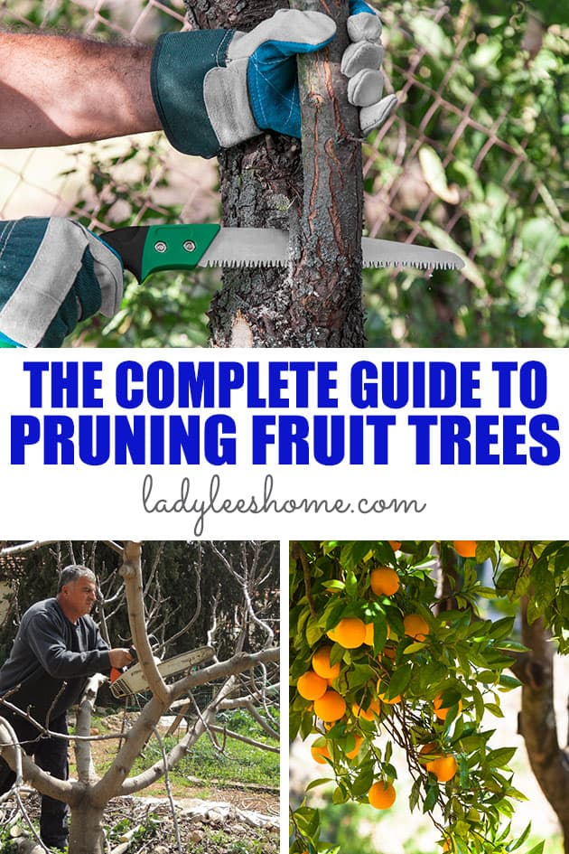 There is a lot to learn when it comes to pruning fruit trees. If fruit production is your goal, then pruning your fruit tree is very important.