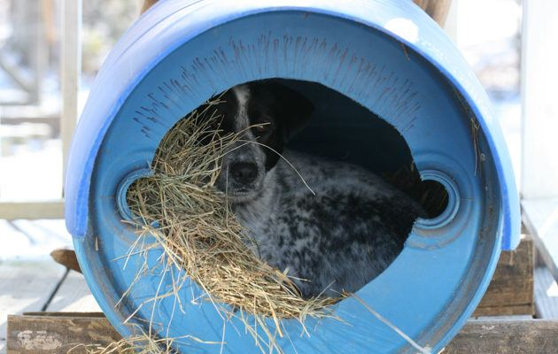 How to Build a Dog House From a Barrel