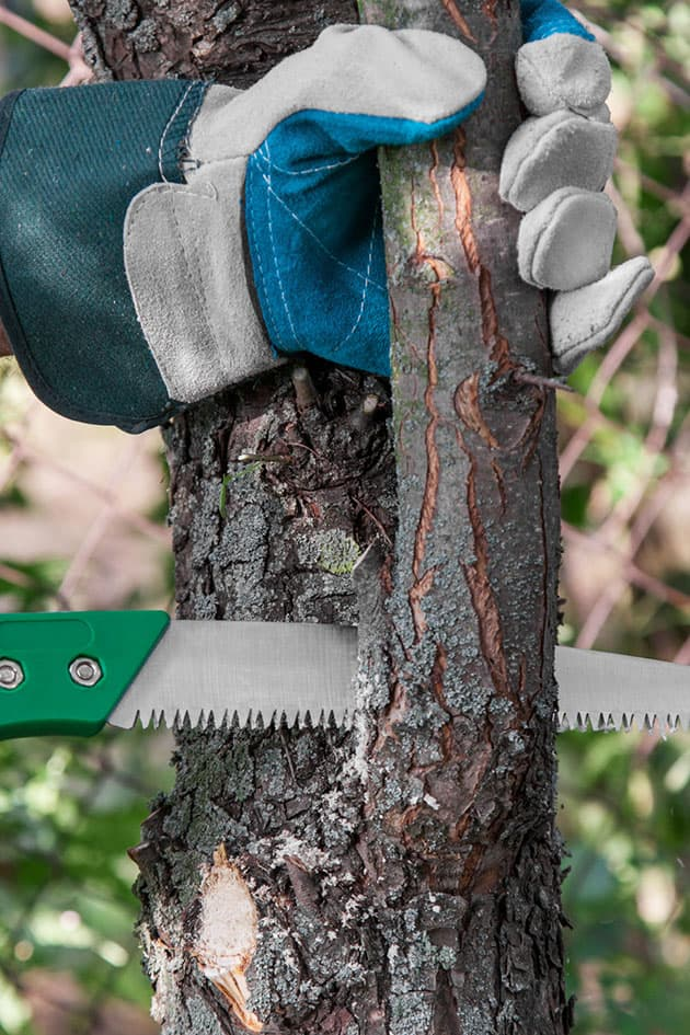 Pruning a main branch.