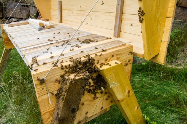 One of the first things you'll have to do as a beginner beekeeper is to choose your hive style. In this Beekeeping for Beginners post we explorer top-bar and Langstroth hives. #beekeeping #Bees #beehive #beekeepingforbeginners #topbarhive #homesteading