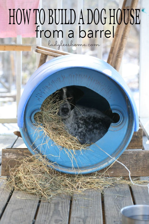 Here is how to build a dog house cheap from a barrel. This dog house cost us nothing, it's super easy to build and the dog loves it! Add this to your dog house ideas and your DIY dog house plans. #doghousediy #doghouseideas #diydoghouseeasy #doghouseplans #homesteading
