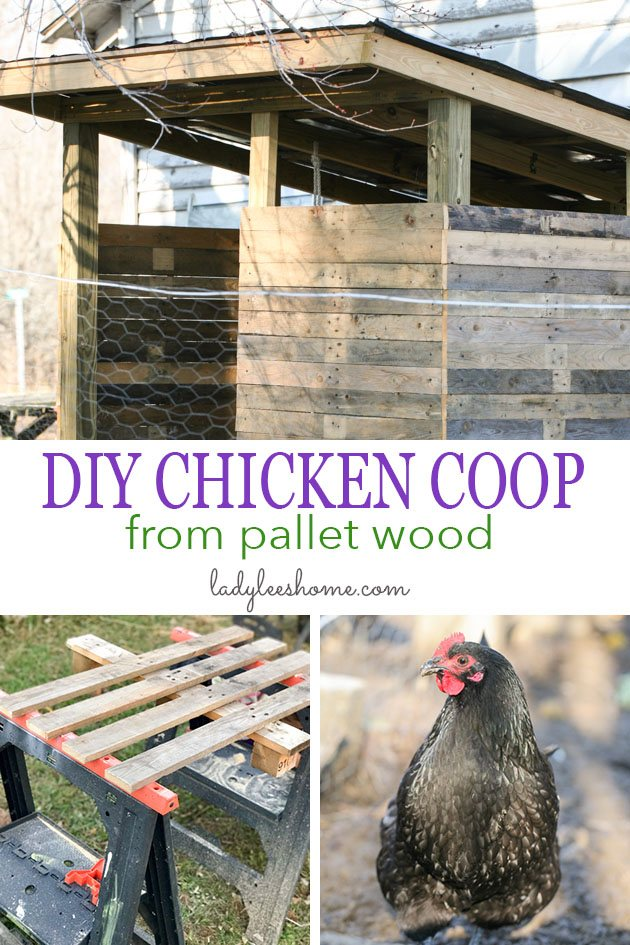 How to build a chicken coop using pallet wood. I used free pallet wood and salvaged some other materials in order to build this coop. This made it possible for me to keep the cost down at $150.  #chickencoopideas #chickencoopdiy #homesteading #chickencoopplans #palletwoodprojects #diypalletwood