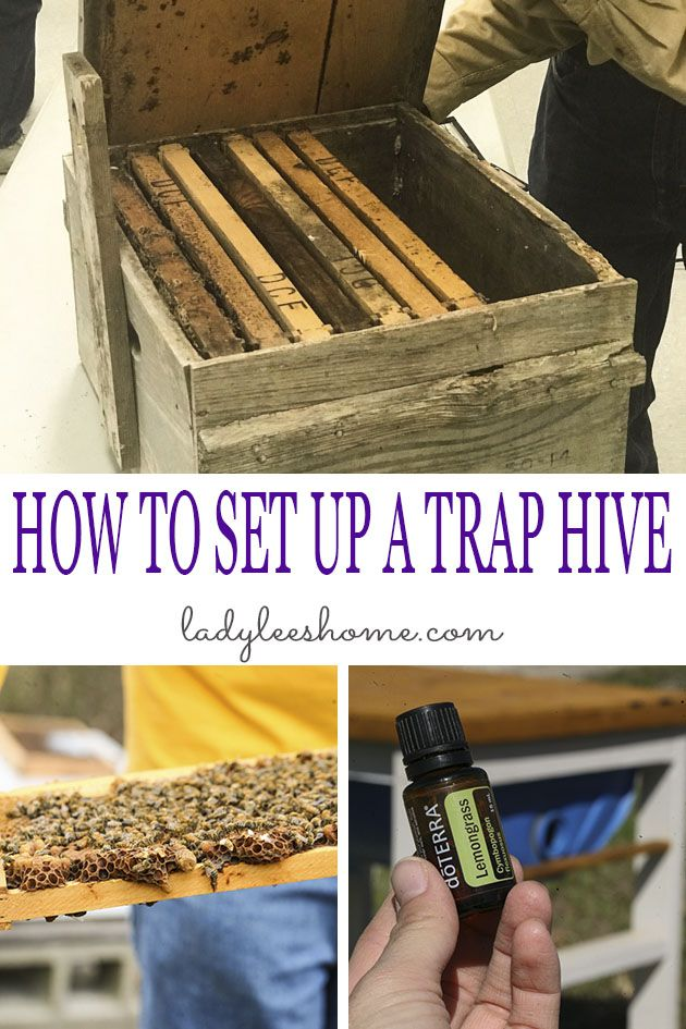 In this post, I will show you how to set up a bee swarm trap so you can attract bees into your trap hive and keep them to produce delicious honey! #beeswarmtrap #swarmtrap #honeybeetrap