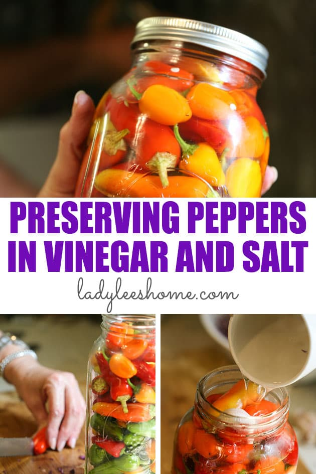 Preserving peppers in vinegar and salt is super easy. It takes minutes to put this dish together and it's a great way to preserve peppers. It takes a few days to ferment and once it's ready it's a healthy and tasty snack or an addition to salads or sandwiches.