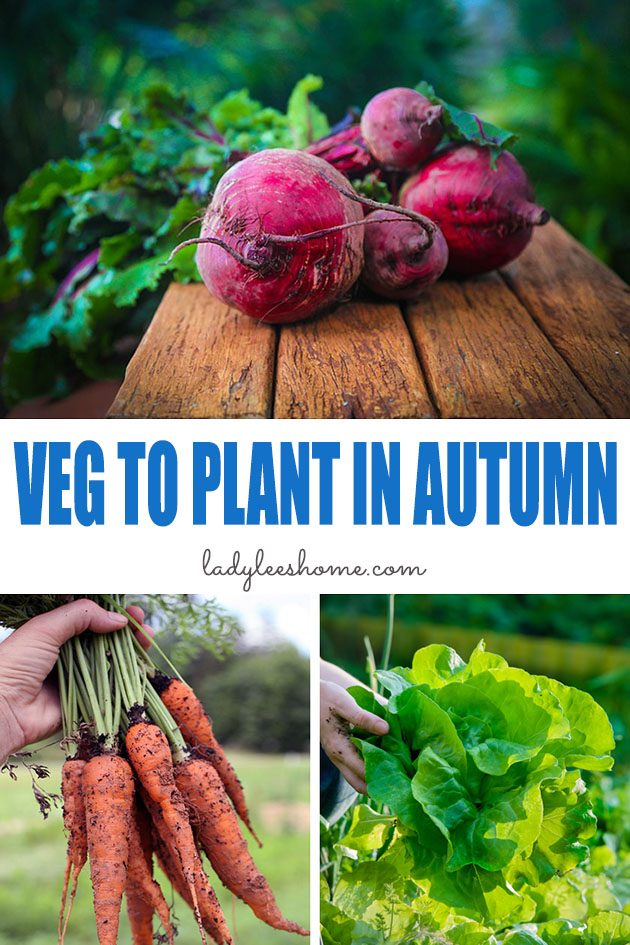 There is a lot to grow in the autumn vegetable garden! Here are 25 vegetables to plant in autumn and information on how to garden in the fall.  #vegetablestoplantinautumn #vegetablesautumnplanting #vegetablestogrowinautumn #autumnvegetablegarden
