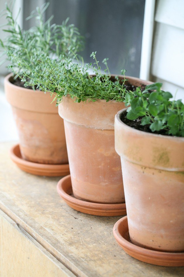 Herbs in containers - 8 herbs to grow indoors year round.