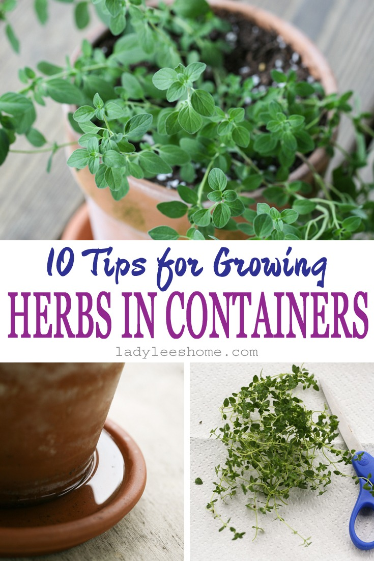 10 Tips For Growing Herbs In Containers