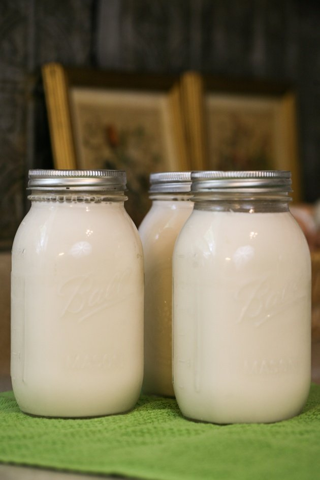 In this post you will learn how to can milk. It can be raw milk or store-bought milk, cow's milk or goat's milk... They are all done the same.