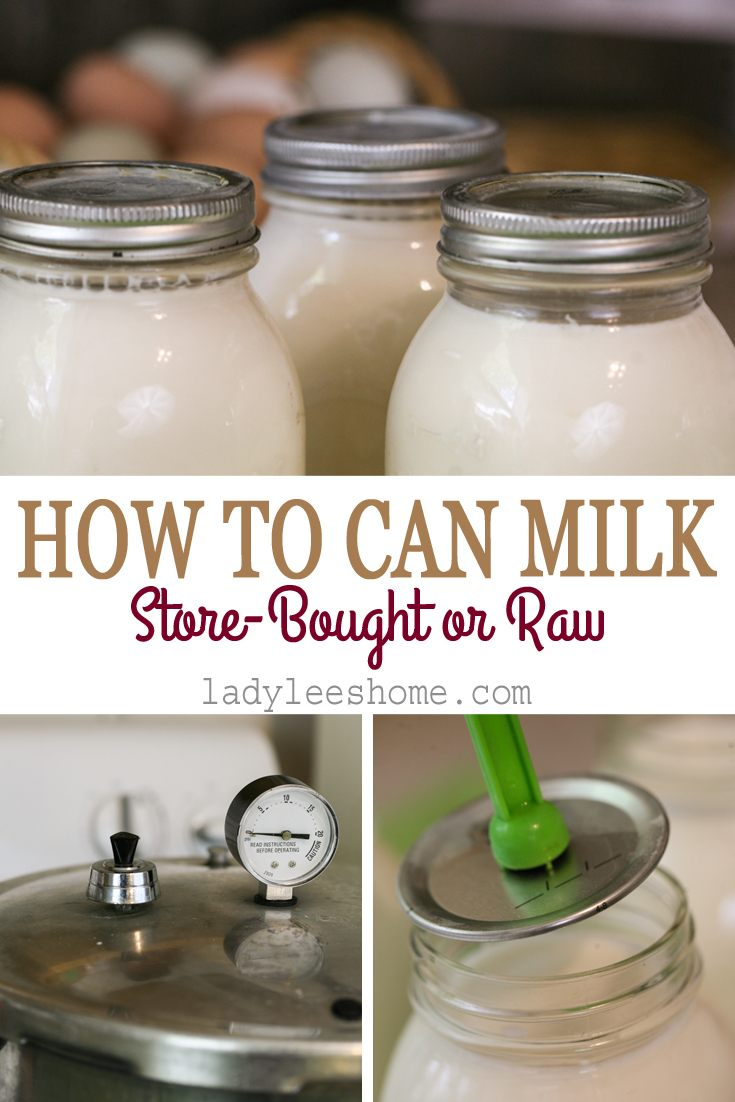 In this post you will learn how to can milk. It can be raw milk or store-bought milk, cow's milk or goat's milk... They are all done the same. #howtocanmilk #canning #milk #homesteading #preserving #cannedmilk #ladyleeshome #homestead #rawmilk