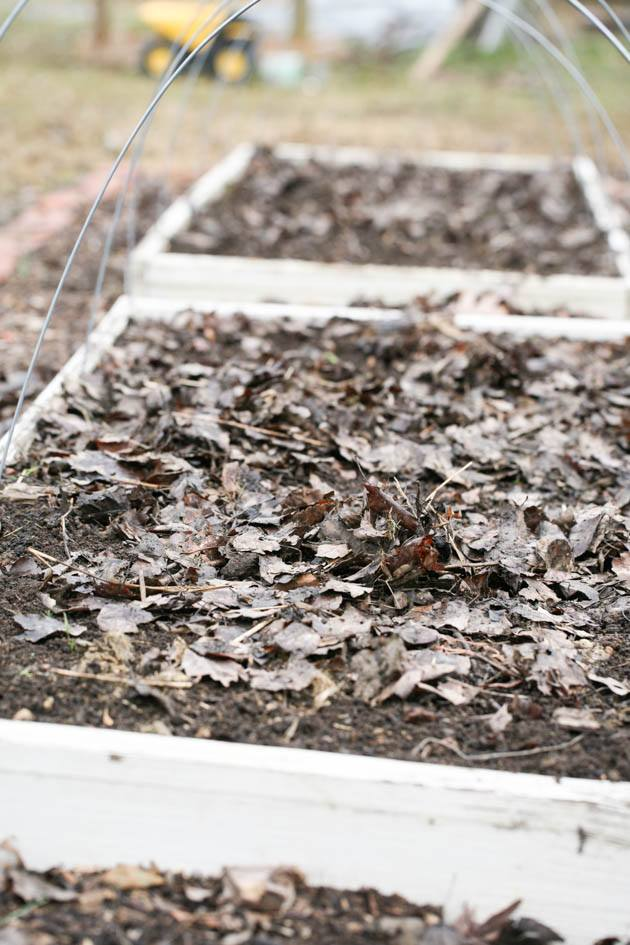 Taking the time in the fall and preparing your garden for winter can save you a ton of time in the spring. It's a simple job that if done well will allow you to simply plant in the spring. It's also going to improve your soil immensely! #raisedgardenbeds #gardening #garden #organicgardening #mulch #gardeningmethods #vegetablegardening #homesteading