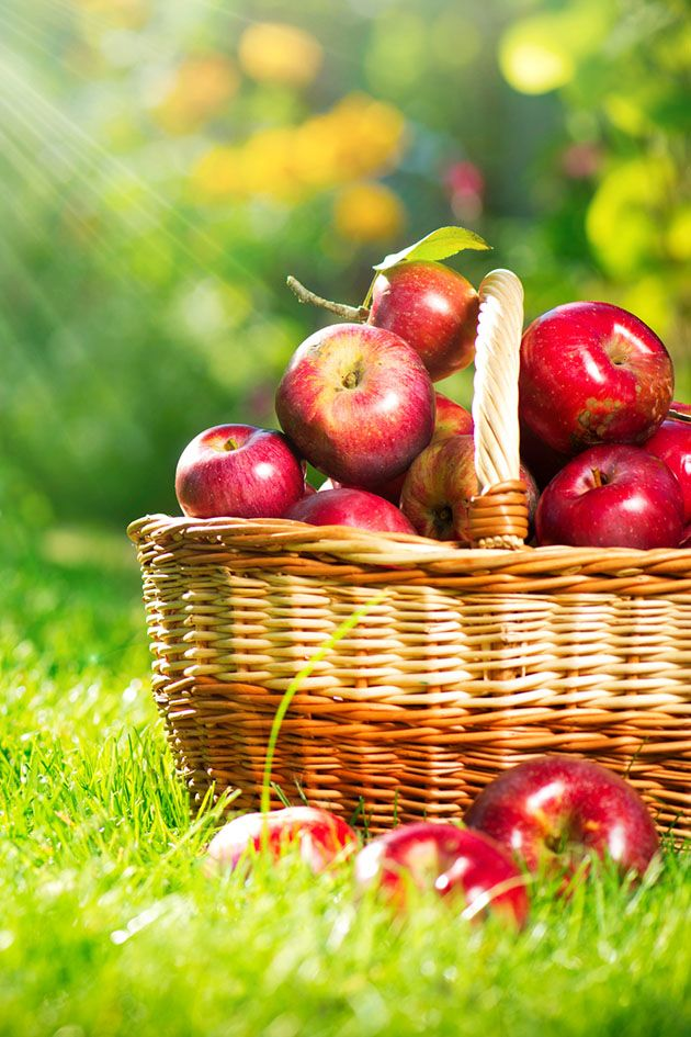 Follow these five steps for choosing the best backyard fruit trees to ensure your trees produce a lot of fruit in the future...
