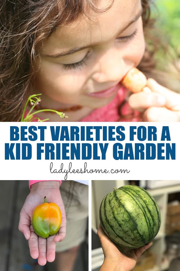 18 best varieties for a kid-friendly garden. Create a beautiful and productive garden that kids love by planting these vegetable varieties!