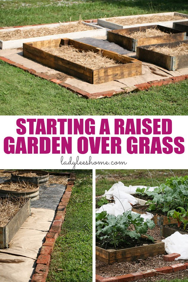 Do you want to turn your lawn into a productive vegetable garden? Let me show you how start a raised garden over grass in five simple steps. #raisedvegetablegarden #turnlawnintogarden #raisedbedgarden