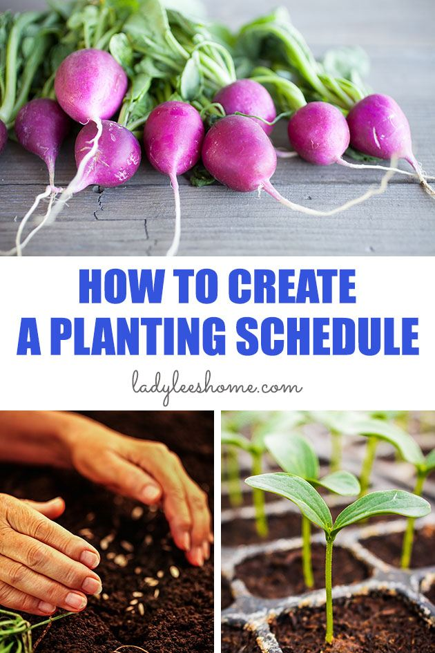 In this post, we will learn together how to create a planting schedule for vegetables. Create a vegetable planting schedule for your vegetable garden so it is as productive as it can be.