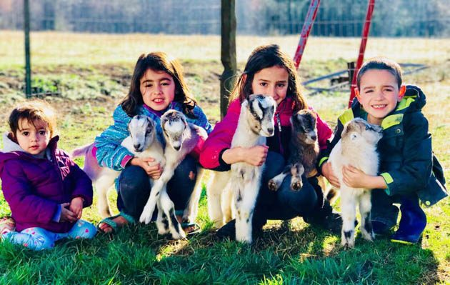 Raising Lamancha Goats. Lamancha goat information. How to raise Lamancha goats and why choose Lamancha goats. #lamanchagoat #goats #howtoraisegoats #lamancha #raisegoatsformilk #goatbreeds