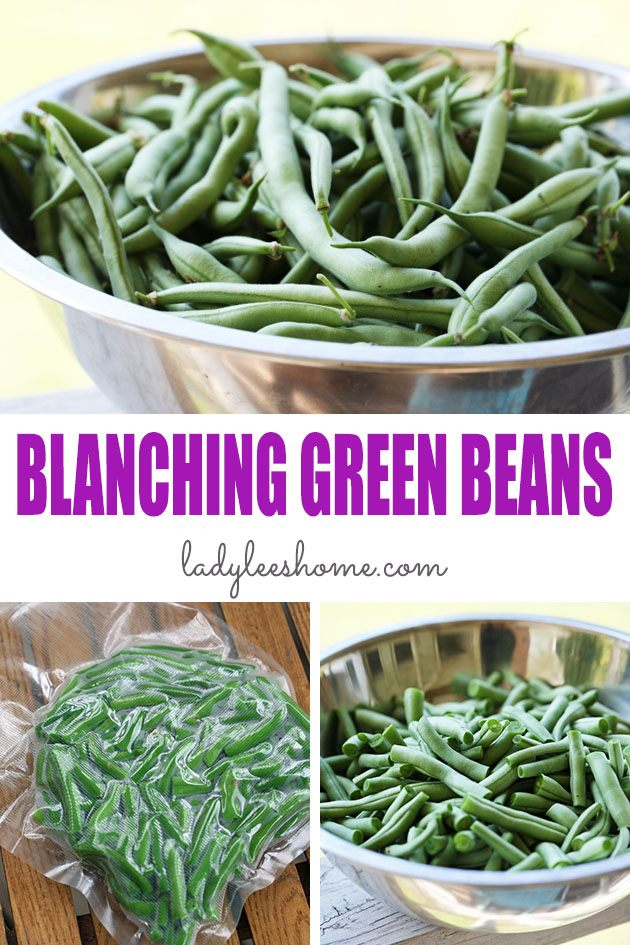 Blanching green beans for freezing is a simple process that will ensure that your preserved green beans stay fresh for a long time. Here is how to do it... #blanchinggreenbeans #blanchinggreenbeansforfreezing #blanching #greenbeans #preservinggreenbeans