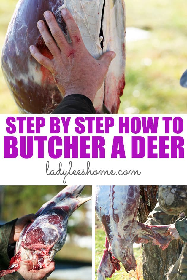 How to butcher a deer on the homestead. This is a step by step picture tutorial on how to process a deer.  #deerprocessing #howtoprocessadeer #deerhunting
