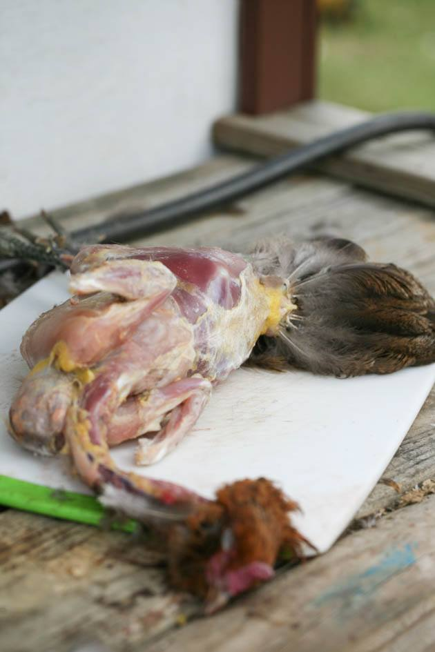 A skinned chicken.