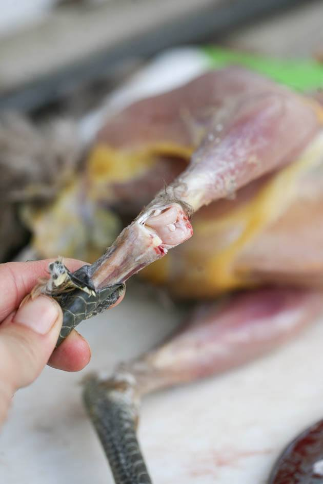 Removing the chicken's feet.