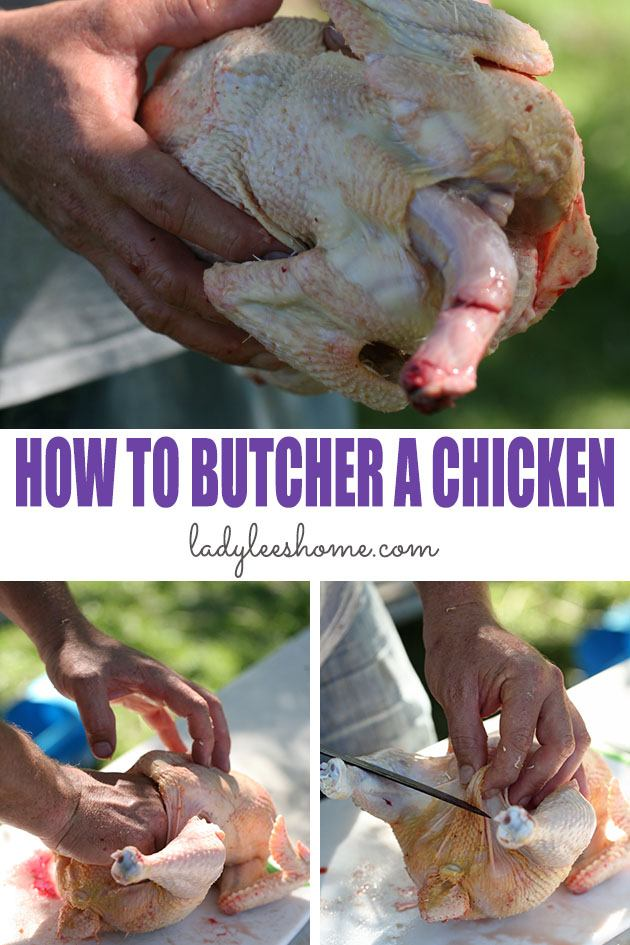 Let's learn how to butcher a chicken at home in a step by step picture tutorial. By the end of this tutorial, you'll be ready to process your own chickens! #howtobutcherachicken #butcheringchickens #howtoraisemeatchickens #meatchickens