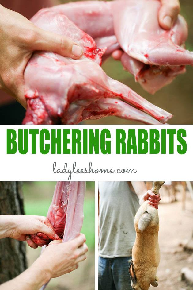 A step by step picture tutorial on how to butcher a rabbit. From dispatching to skinning to gutting. Everything you need to know about processing a rabbit at home. #howtobutcherarabit #meatrabbits #howtoprocessarabbit