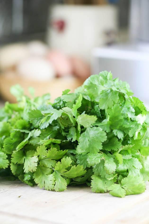 A bunch of cilantro.