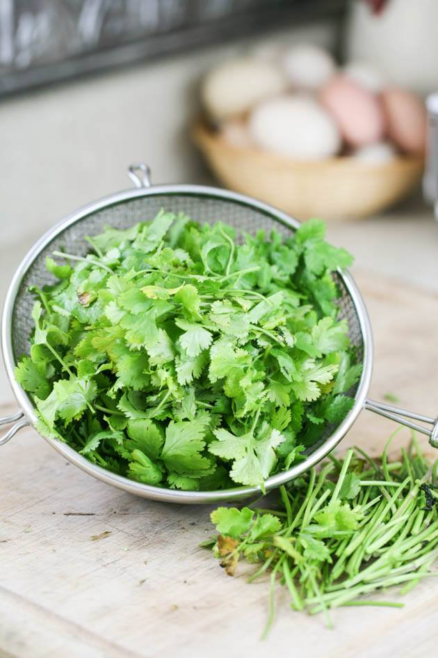 Cleaning the cilantro.
