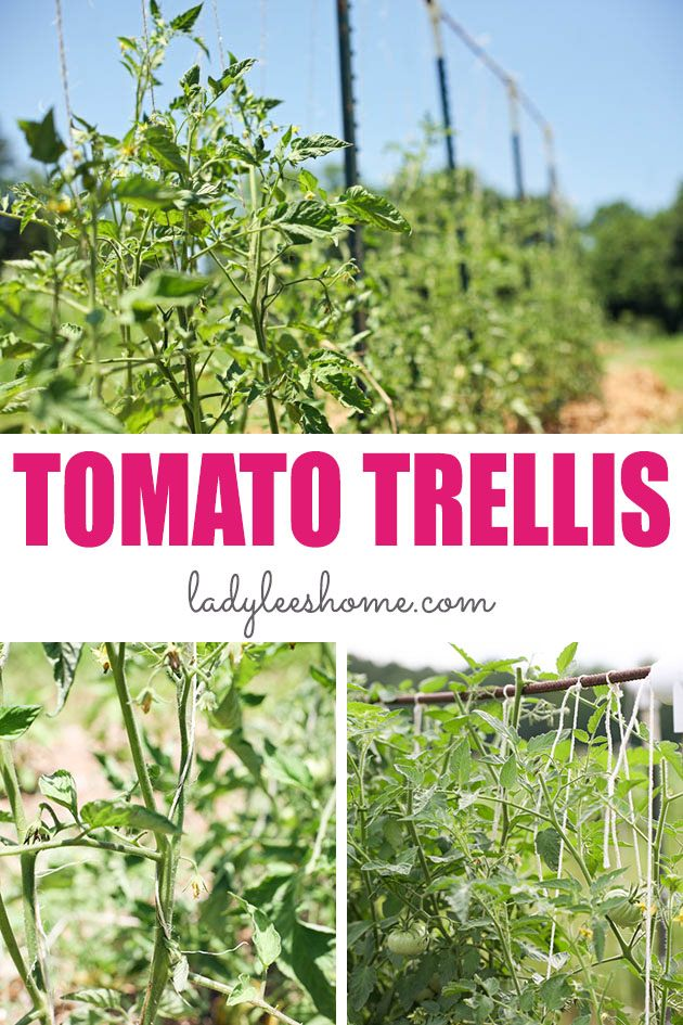 Let me show you how to support tomato plants with a simple system that is strong, affordable, and very easy to set up. Support your plants so they can produce a ton! #tomatotrellis #trellis #growingtomatoes #vegetablegardening