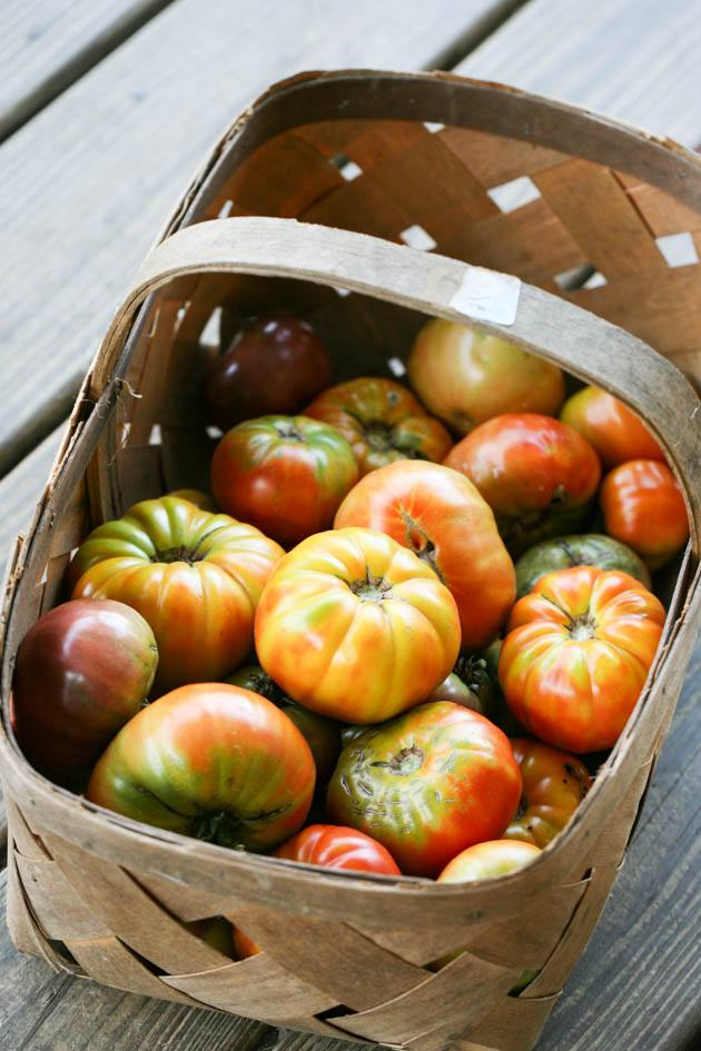 A basket of tomatoes from the garden.