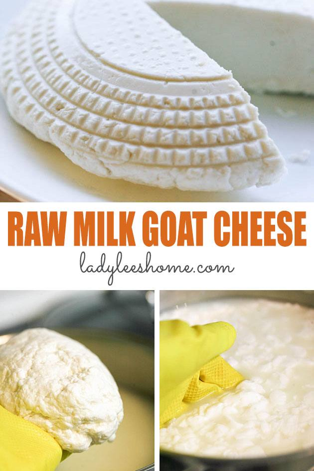 This raw goat milk cheese recipe is easy and is a great way to process your raw goat milk into cheese. You can freeze this cheese or enjoy it right away! #rawmilkgoatcheese #goatcheeserecipe #howtomakegoatcheese #cheesemaking #homemadecheeserecipe