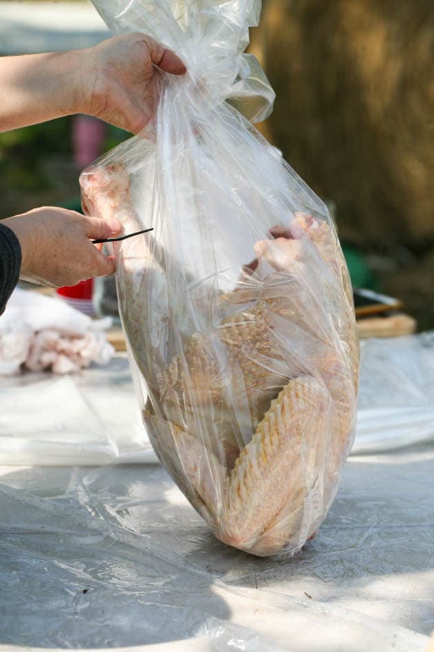 Packing the turkey in a shrink bag.