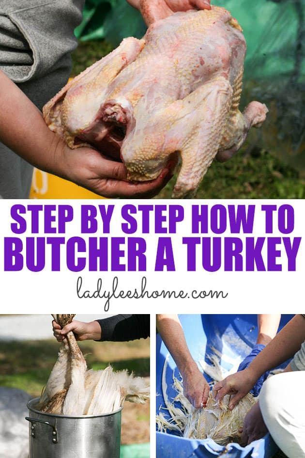 This is a step by step picture tutorial on how to butcher a turkey. From dispatching to packing. Everything that you need to know about butchering turkeys.